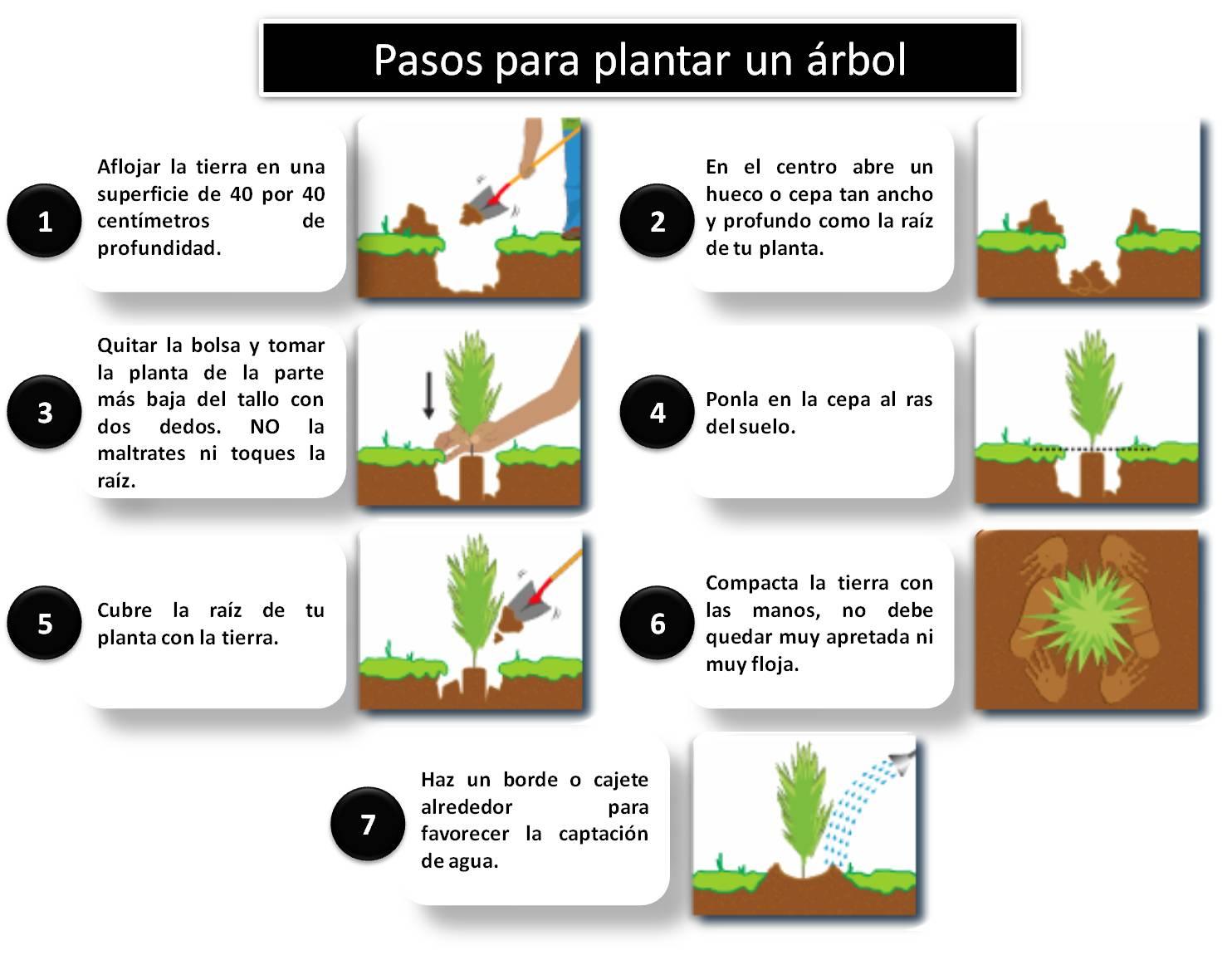 Las plantas sembrando un arbol for Estudiar jardineria
