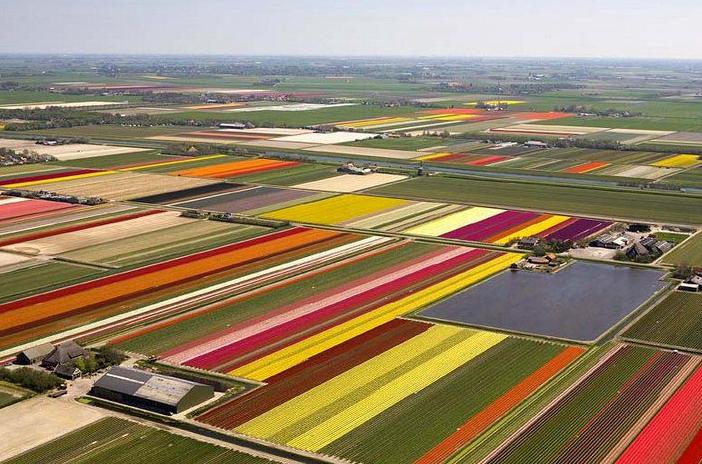 Tulip fields in Mt Vernon, Washington. They are beautiful.