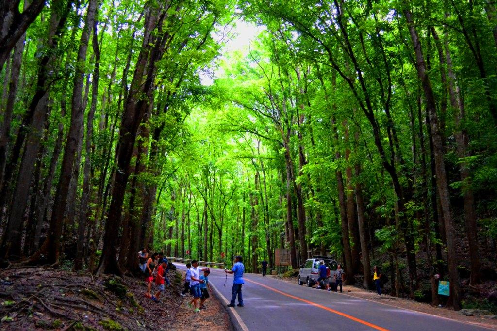 Visit BOHOL: Bilar: Manmade Forest