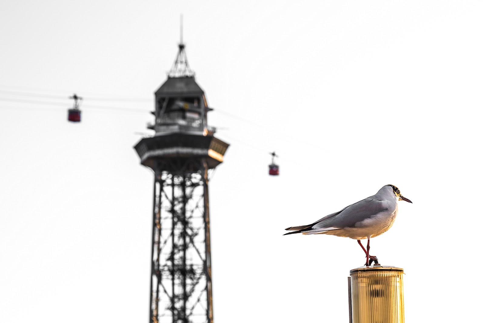 Sobre jaulas y pájaros :: Canon EOS 5D MkIII | ISO100 | Canon 24-105@105mm | f/9.0 | 1/125s