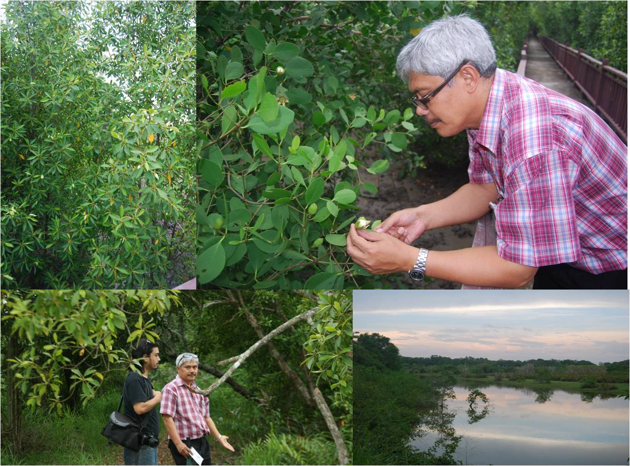dr mat kuala selangor nature park ecology education and ecotourism