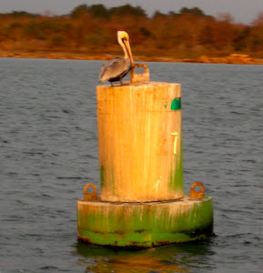 Pelicans disfigure the buoys.  This one is green + poop.  Lots of poop.
