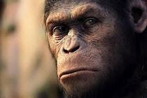 Charlie el primate