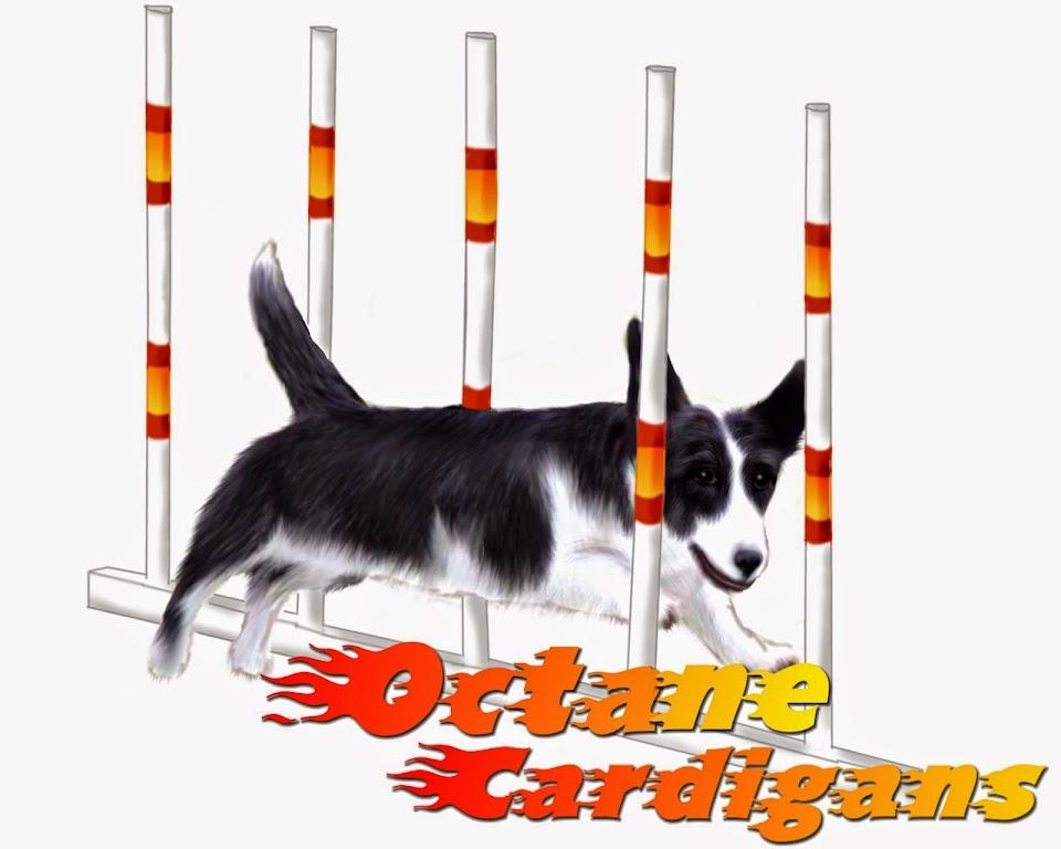 Octane Cardigans Blog