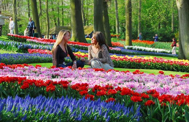Spring Season in Holland