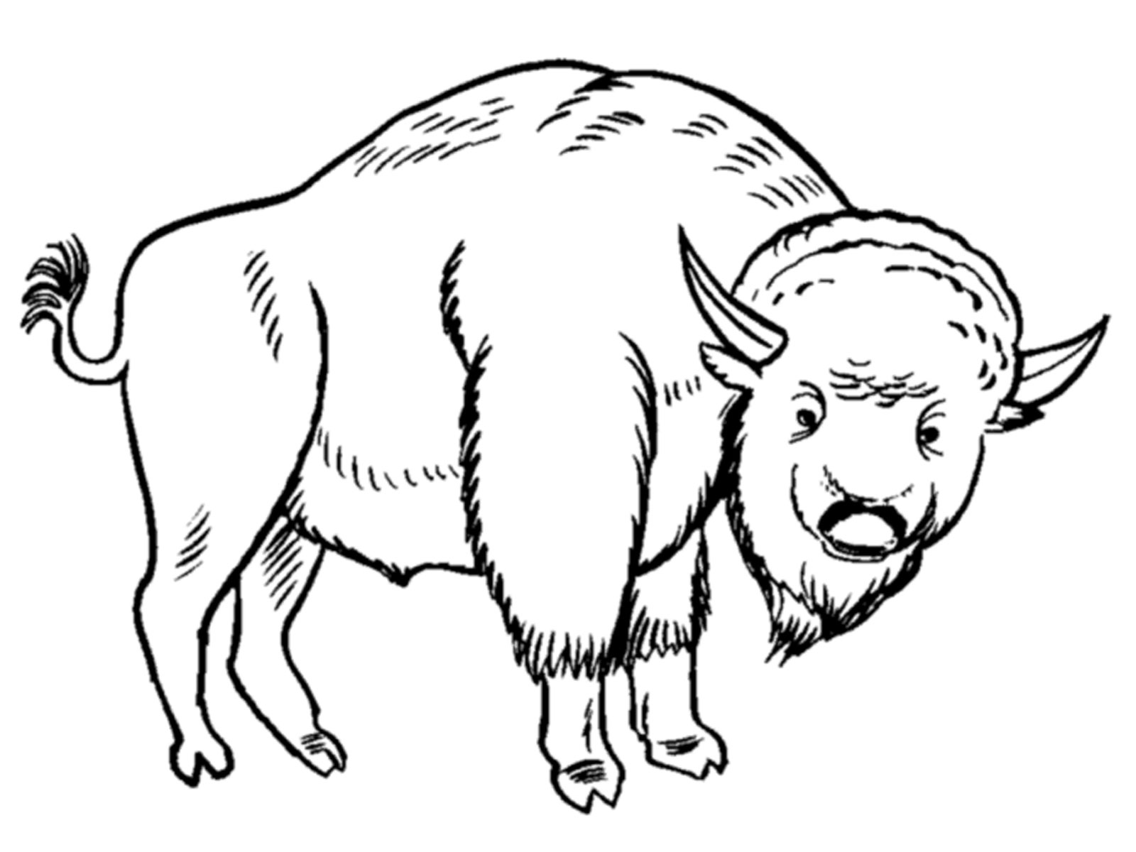 European Animals Coloring Pages : Bison coloring pages for kids realistic
