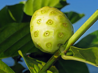 It was reported that Noni contains polysaccharide