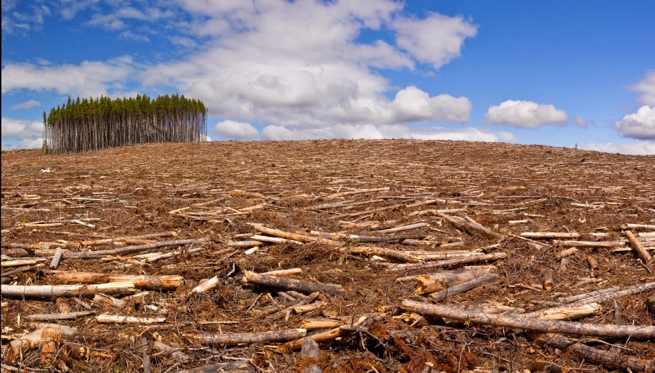 the importance of the tropical rainforests around the world and the effects of forest destruction