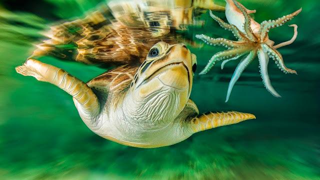 Imagen Tortuga nadando