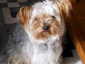 Mirar a Lola, que monaa a que si... es uno de nuestros perros