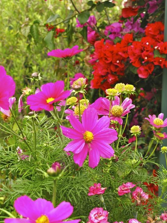 fotos de jardim florido : fotos de jardim florido:Um jardim para cuidar: Para um verão mais florido ! as minhas quatro