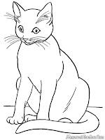 Gambar Kucing Siam Untuk Diwarnai