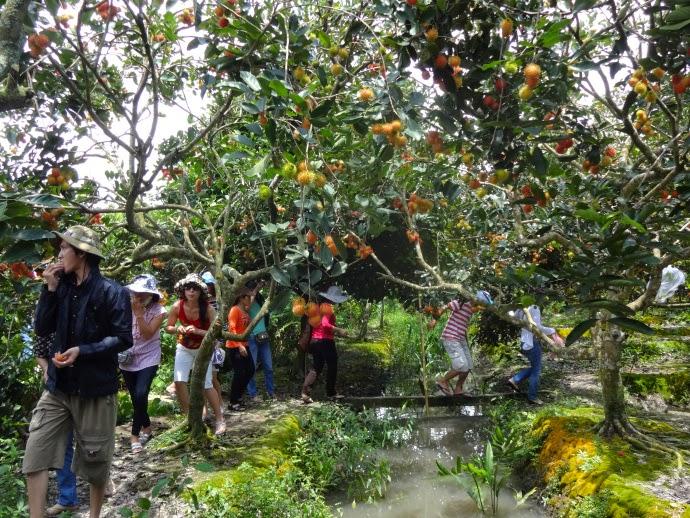 Visiting Cai Mon Orchard village