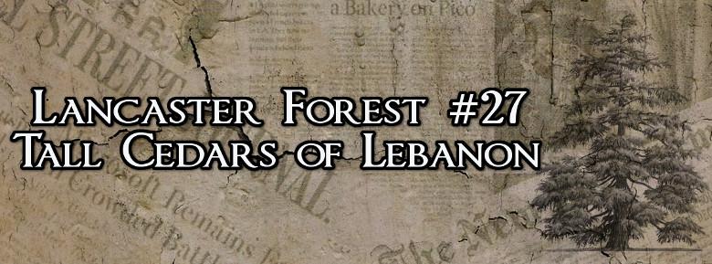 Lancaster Forest 27