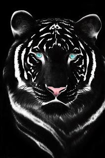 صور شخصية للفيس بوك 2013 النمر الاسود