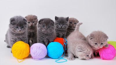 Lindos gatitos jugando con bolas de estambre en diversos colores