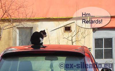 poveste cainele pisica si motanul