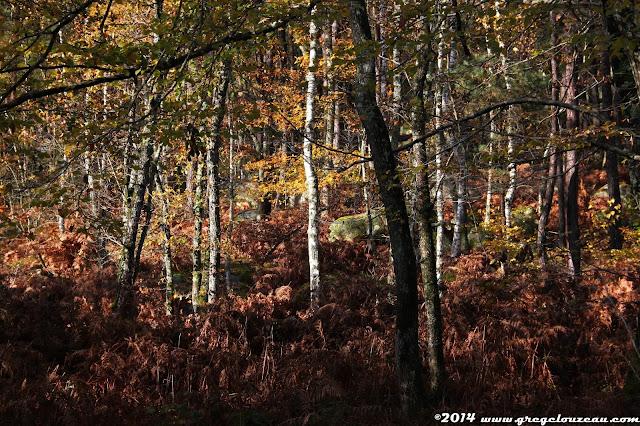 Paysage d'automne, Cuvier châtillon, Fontainebleau, (C) 2014 Greg Clouzeau