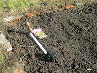 Allotment Jobs - November - Sowing Broad Beans