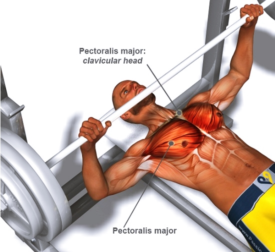 top 5 chest exercises for mass all bodybuilding com