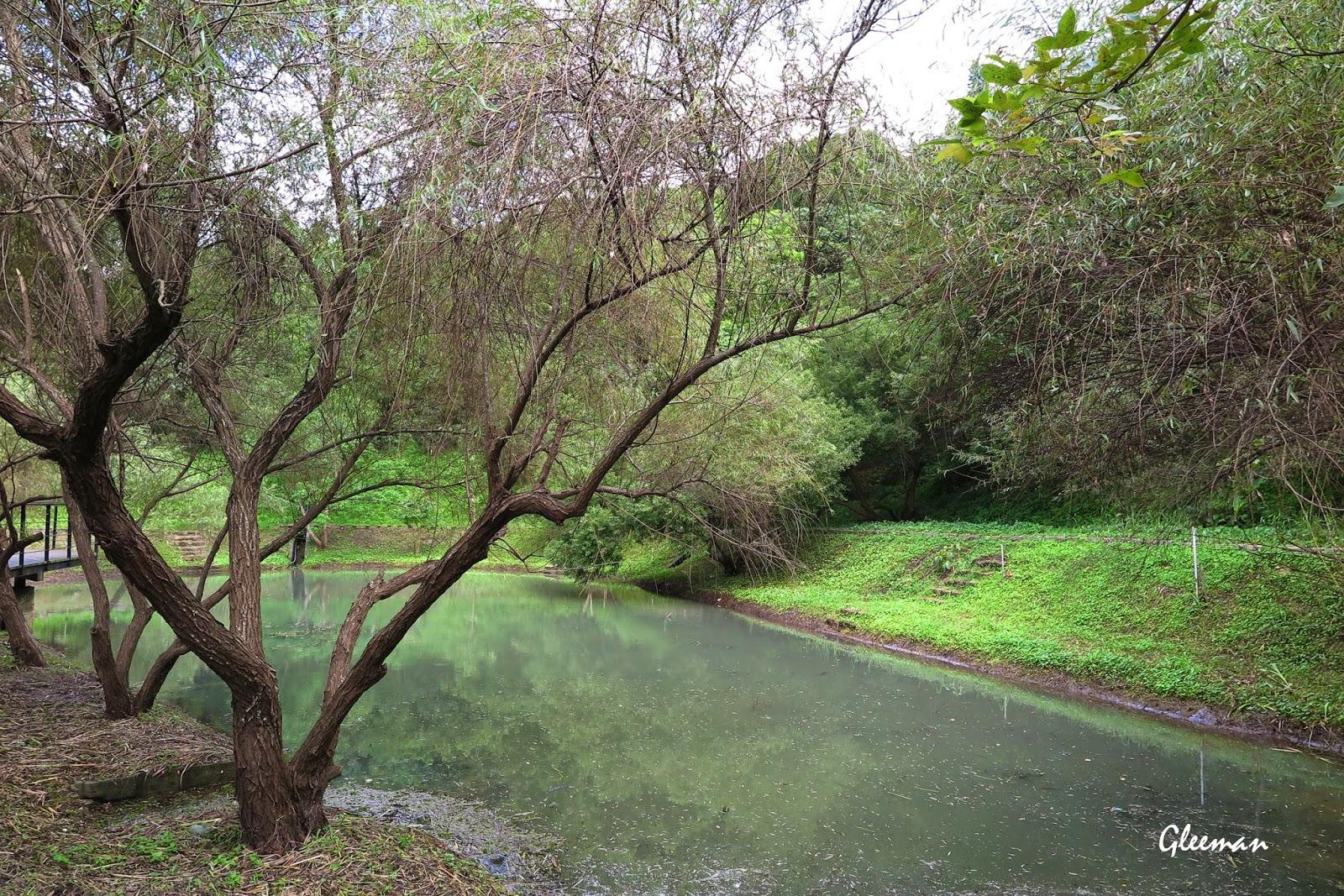 經過大地工程的整理後的生態池變得很乾淨