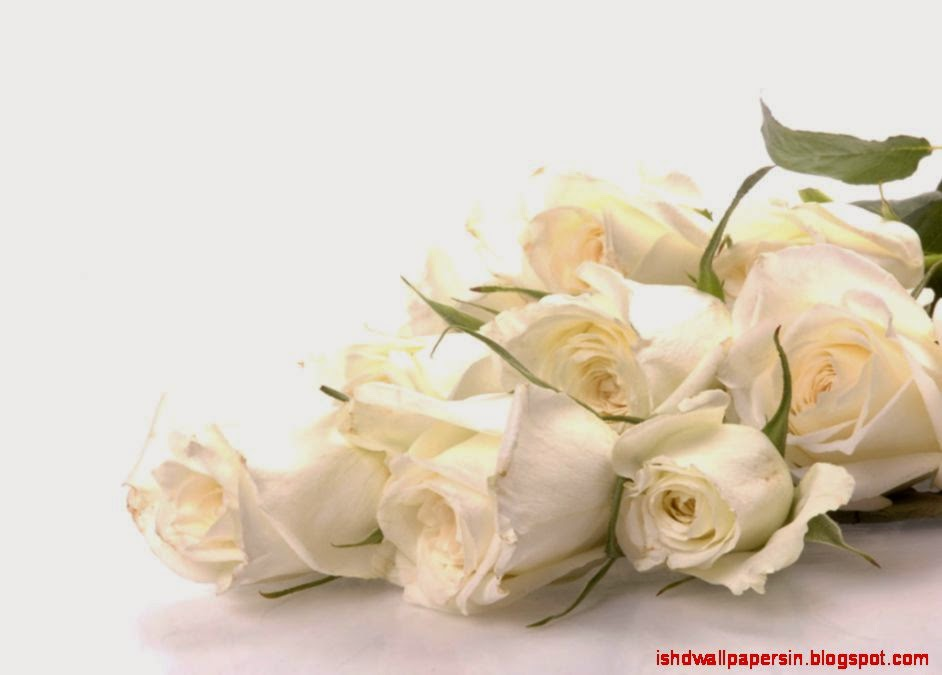 Abstract White Rose Wallpaper Pure White Rose Wallpaper