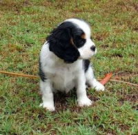 Simple Puppy Training Tips To Try Right Now