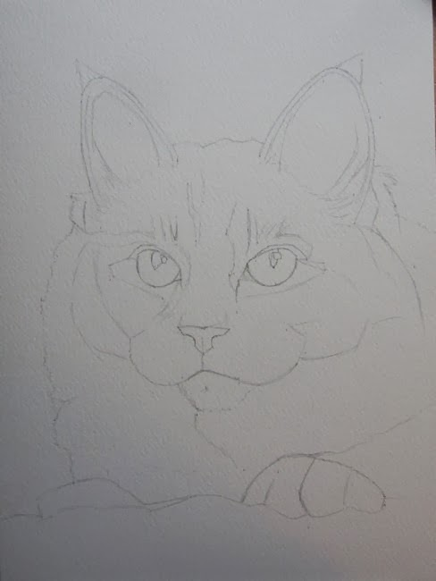 esquisse chat aquarelle