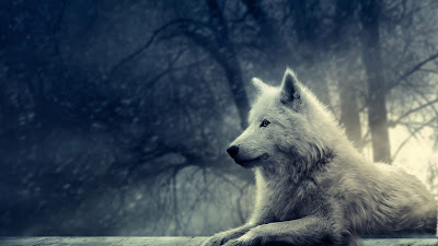 Papel de Parede de Animais Lobo Branco, animal wallpapers hd free