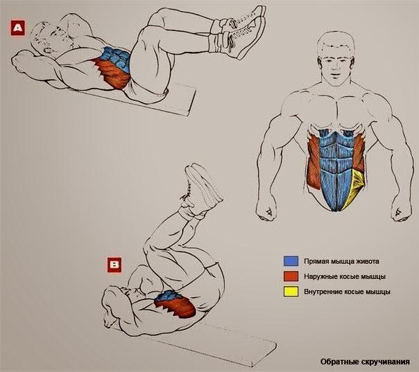Накачать все мышцы тела домашних условиях