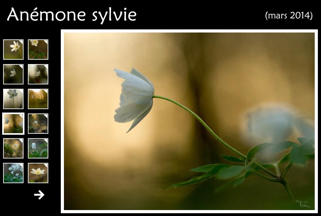 http://instantalautre.free.fr/galeries2014/flore/anemonesylvie/