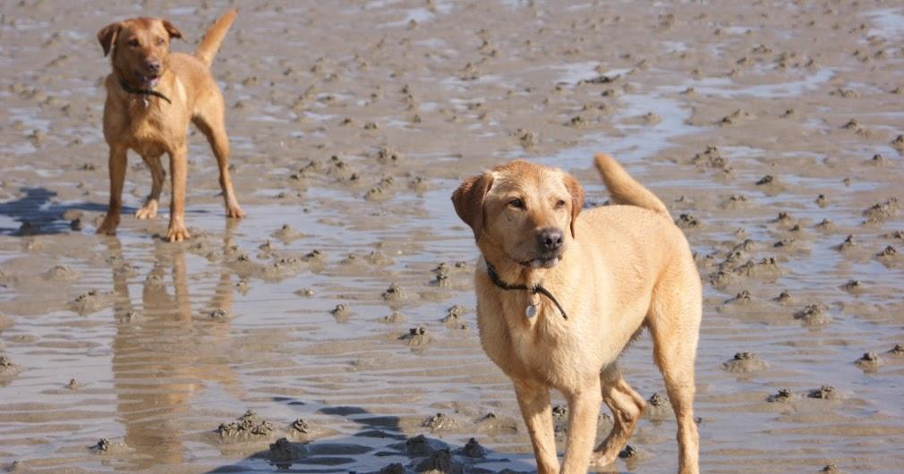Dog Friendly Pubs Troon
