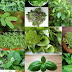 7 Plants and Herbs That Can Boost Lung Health, Heal Respiratory Infections