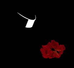 Vocation of a Gadfly