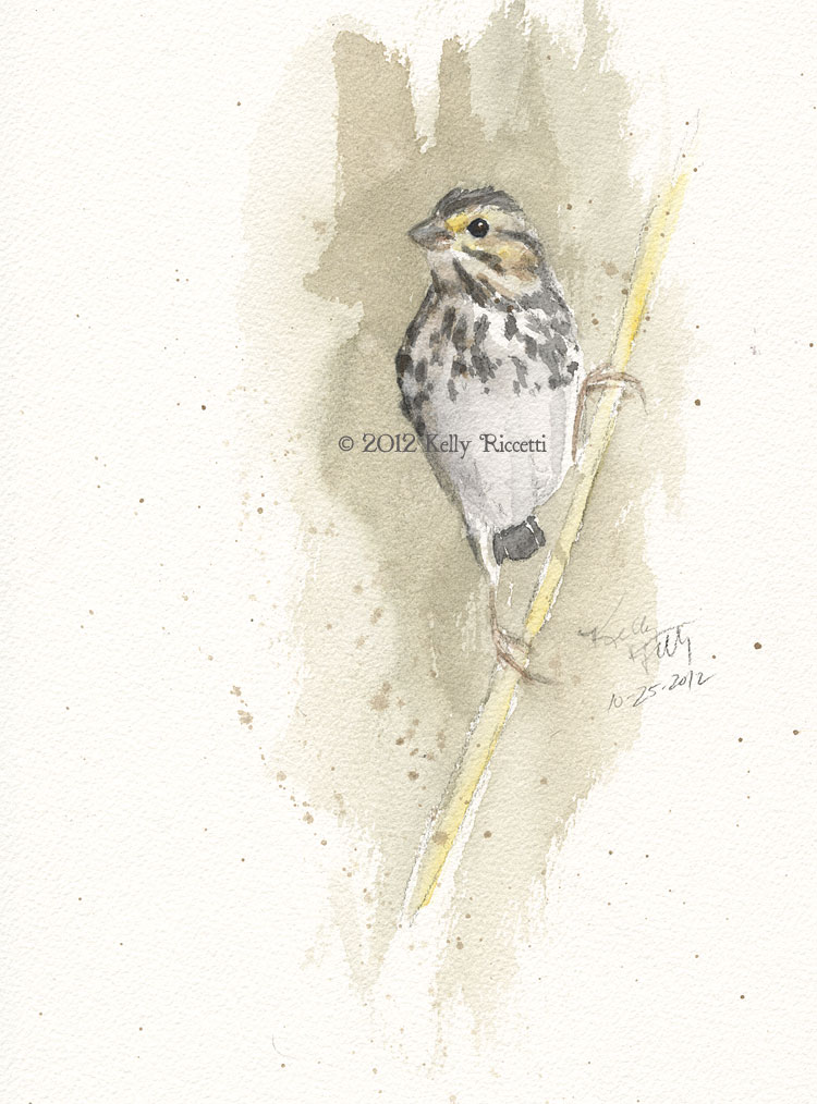 A Savannah Sparrow in a spring meadow at Armleder Park in Hamilton County Ohio (original watercolor by Kelly Riccetti)