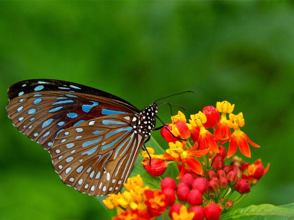 yellow flowers and butterflies free wallpaper desktop | wallpaper