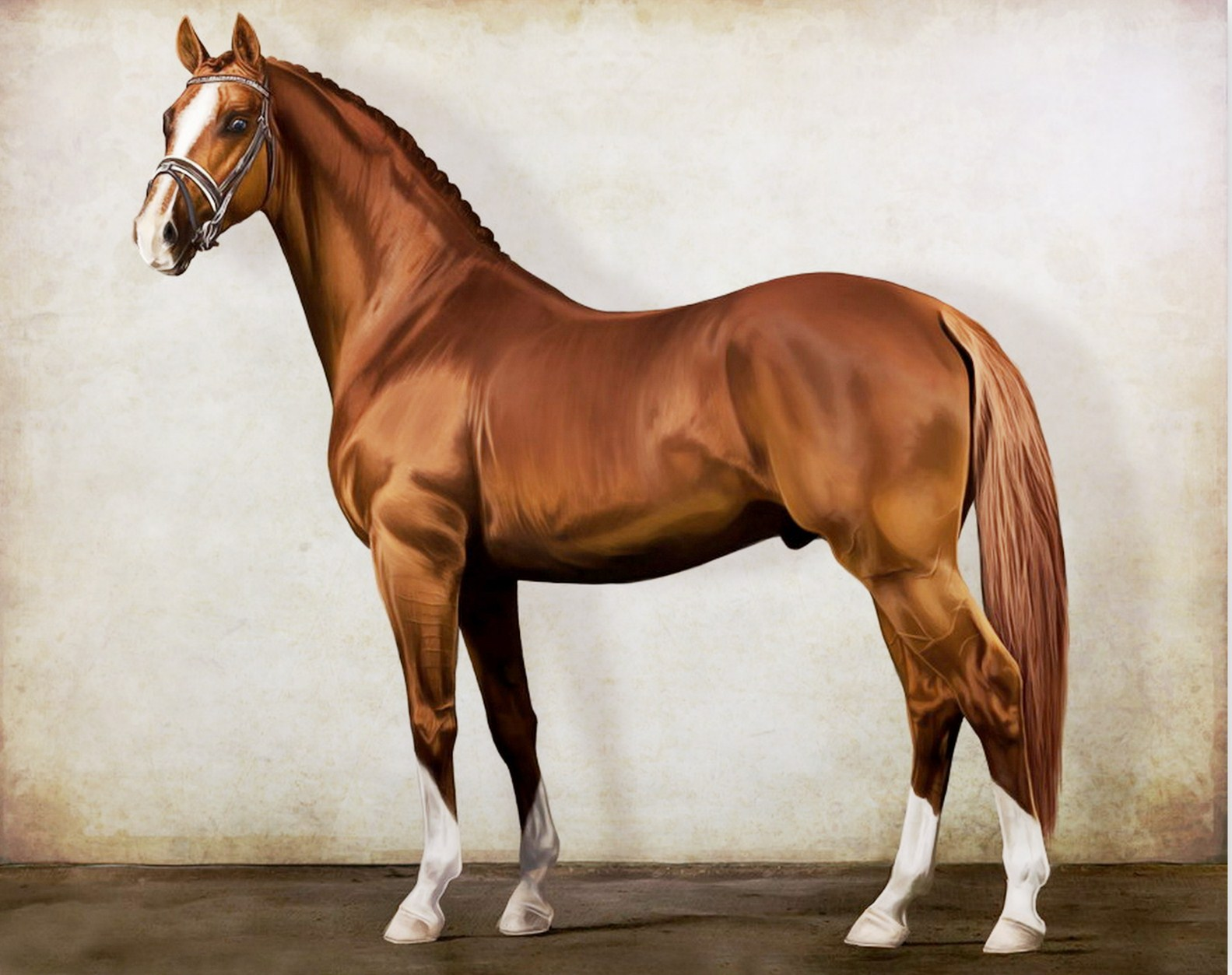 Los caballos mas bonitos del mundo fotos auto design tech - Los cuadros mas bonitos ...