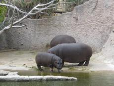 Zoológico en Puebla