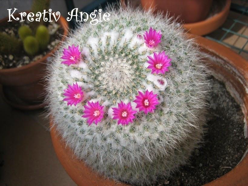 il mondo di kreativ angie kaktus bl ht auch noch einmal im oktober cactus fiorisce un 39 altra. Black Bedroom Furniture Sets. Home Design Ideas