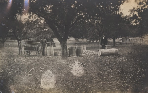 Photo of men, wagons and barrels of potatoes in an orchard