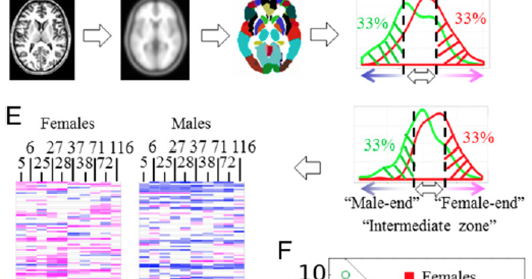 wiring the brain sex on the brain a tale of two studies
