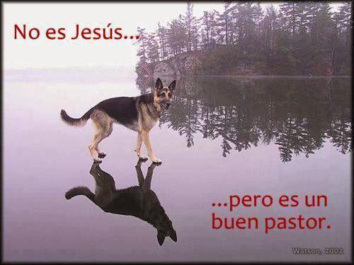 imagenes graciosas - perro