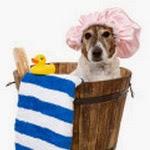 L'entretien du chien à poils ras