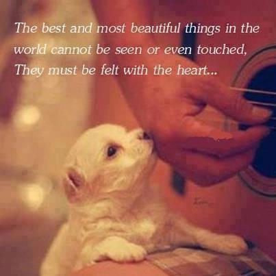 The best and most beautiful things in the world cannot be seen or even touched, They must be felt with the heart....