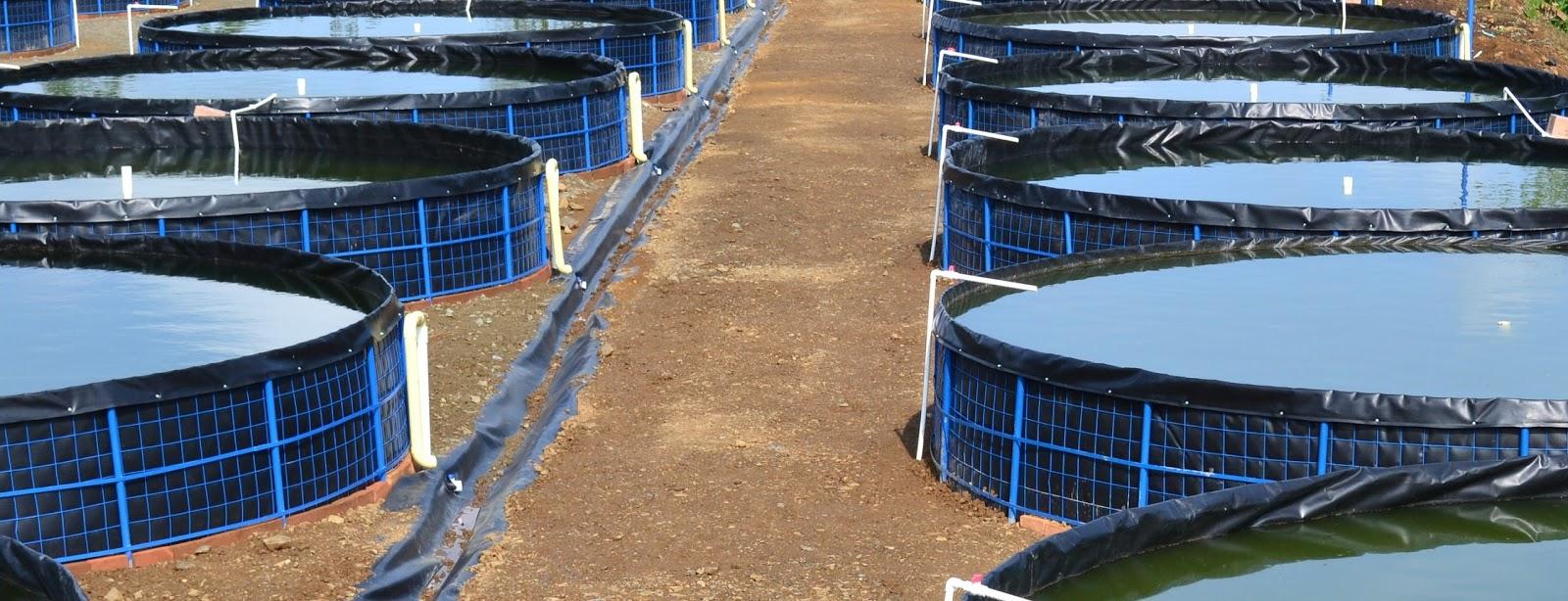 Asesoria y estanques para cultivo de tilapia mojarra roja Estanques para piscicultura