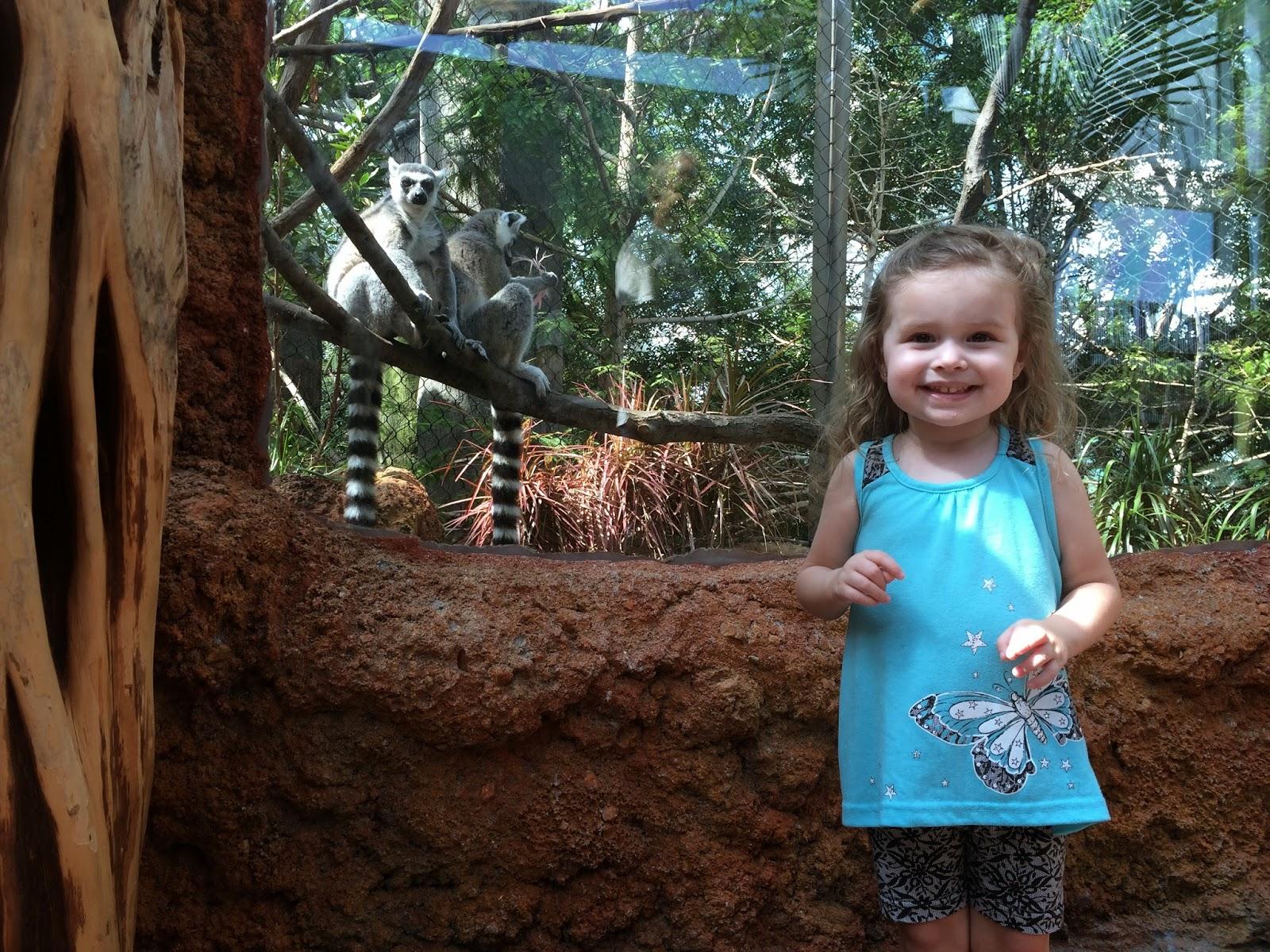 #ivysvariety Lemurs at The Florida Aquarium Tampa