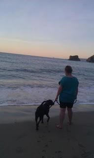 Dog cool down at Cornish Beach