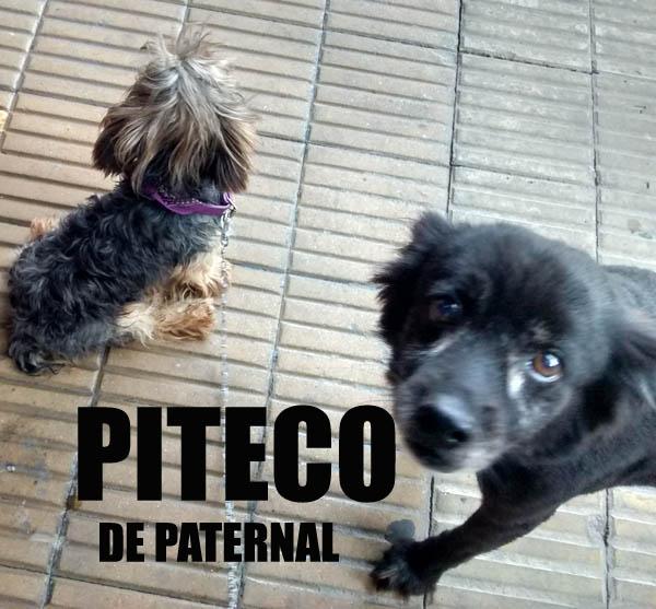 PITECO de Paternal