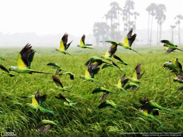 5.) A flock of colorful birds - 12 Photos That Prove Nature is Awesome