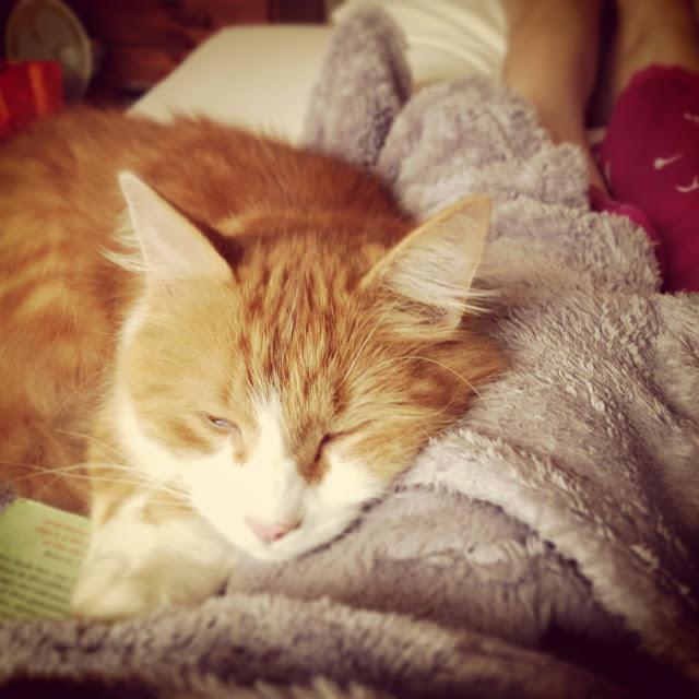 freddy cat cuddles